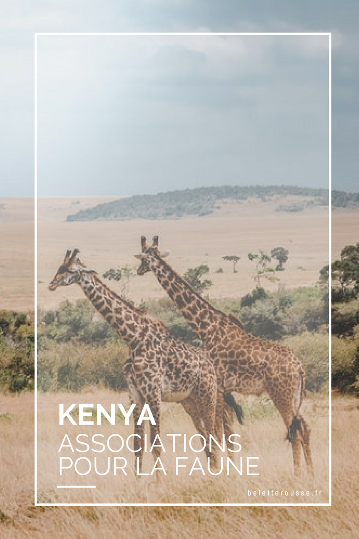 associations kenya animaux sauvages