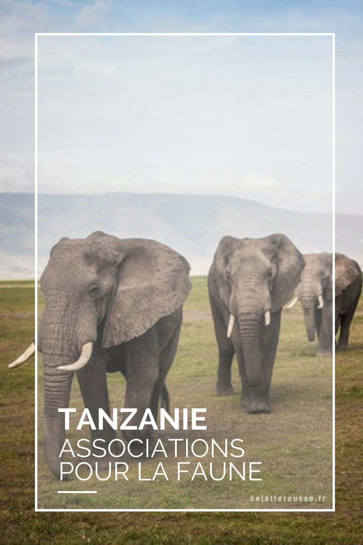 tanzanie associations animaux