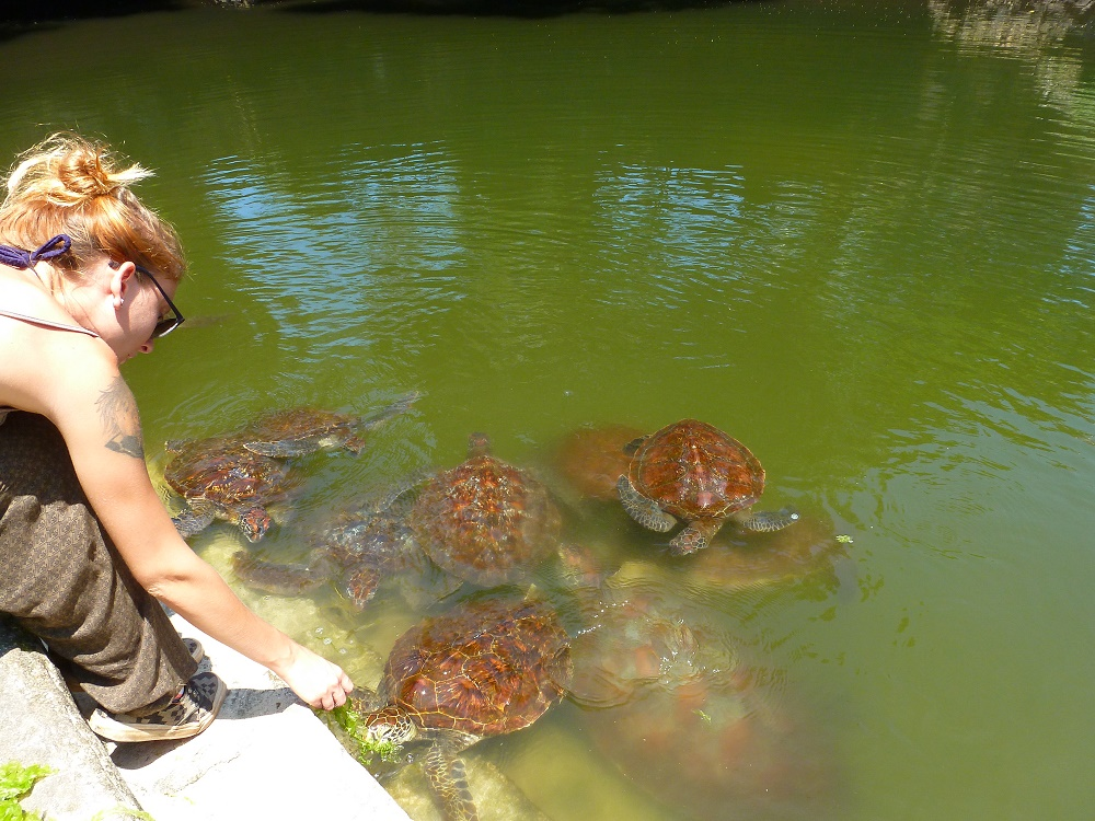Nungwi tortues