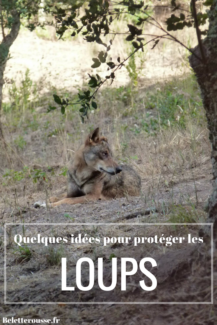 protection loup